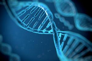 Anti Aging beginnt bei den Chromosomen